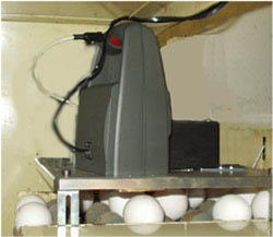 Automatisches Eierstempeln: jetStamp 792E für 1 Transportband