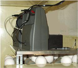 Eierstempel für 2 Transport-Bänder
