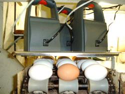 für 3 Eiersortier-Bänder
